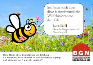 BiNi_Wildblumenwiese